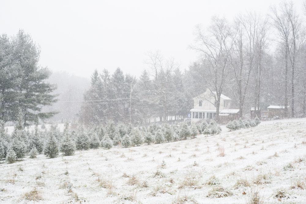Christmas 2017 scenes-2.jpg