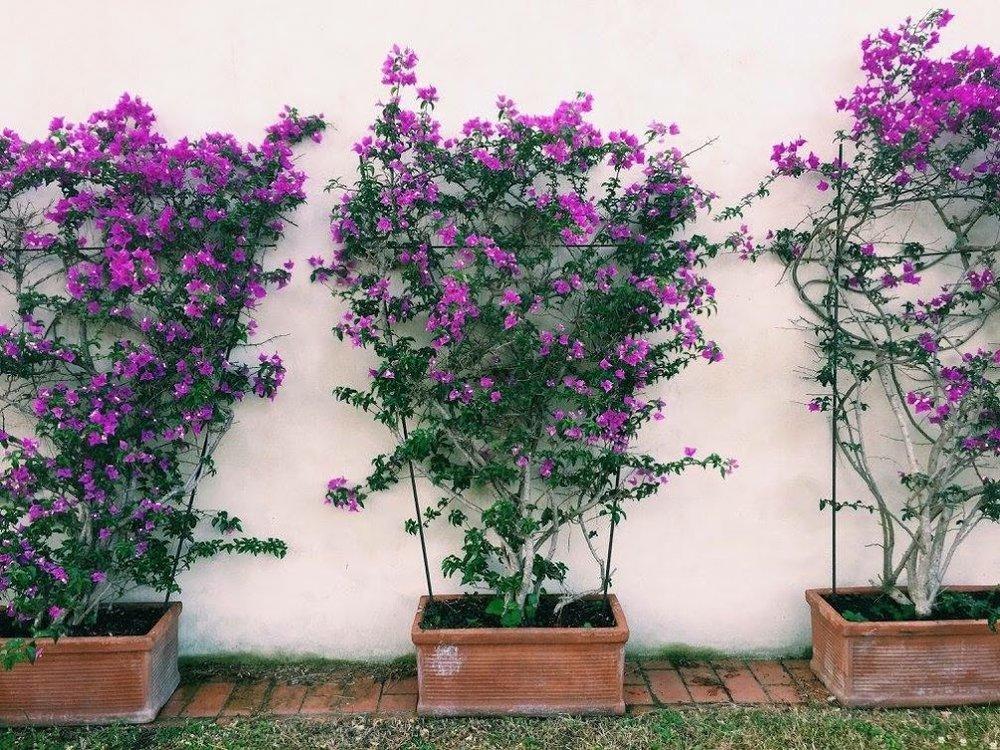 Italy flowers.jpg