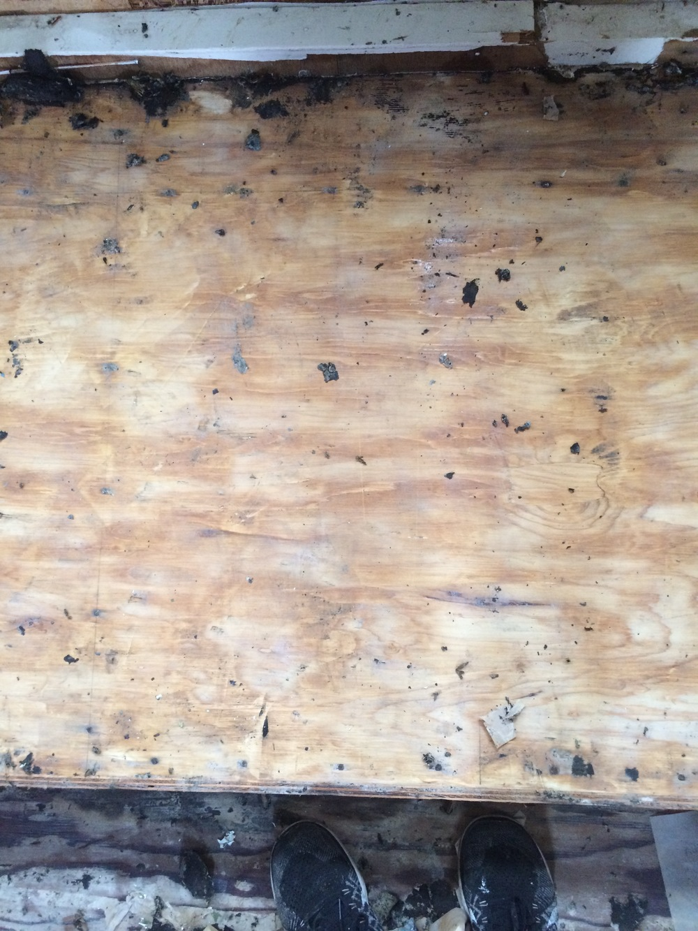 Original plywood floors after glue was scraped off