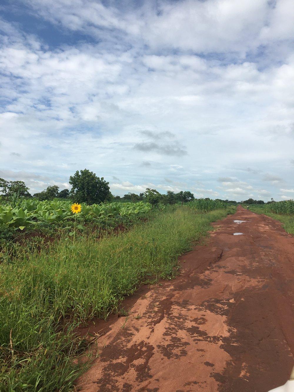The road to Nambuma Health Center