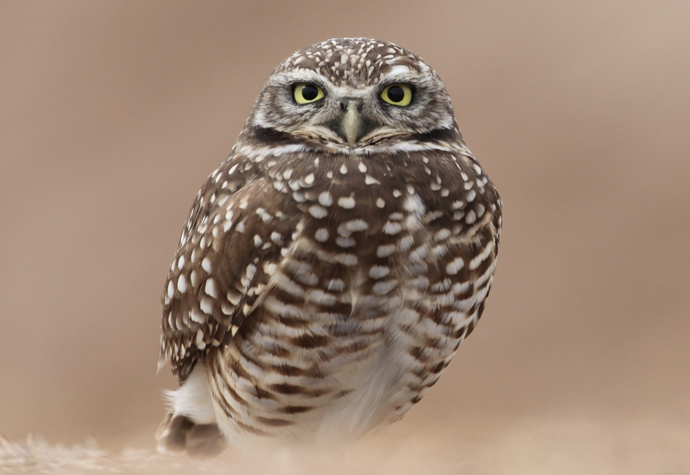 To get this shot, I laid down on the side of the highway to get at eye-level with the bird.                                   Canon 5D + 500mm lens