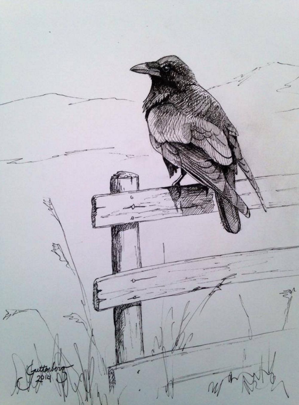 Common Raven  Pen and Ink