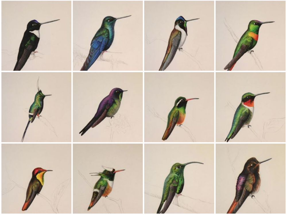 Hummingbirds done in amazing detail and accuracy!