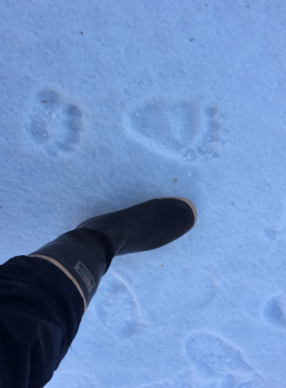 Grizzly tracks were always within sight as we followed bear trails through the northern bush. A recent snow and severe cold snap pushed the bears into hibernation- we hoped.