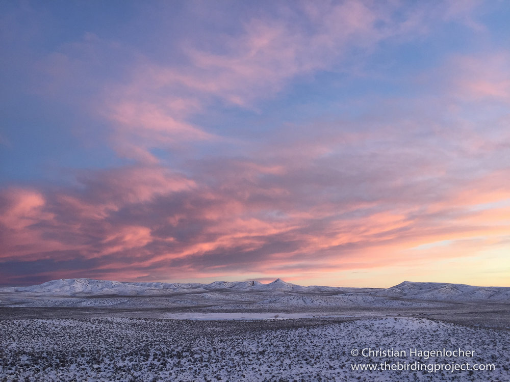 Sunrise over the Sagebrush Sea. You can see the open snow-blanketed Sage-Grouse lek in the middle of the image.