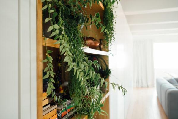 Stocksy-plant-bookcase-Agencia-599x400.jpg