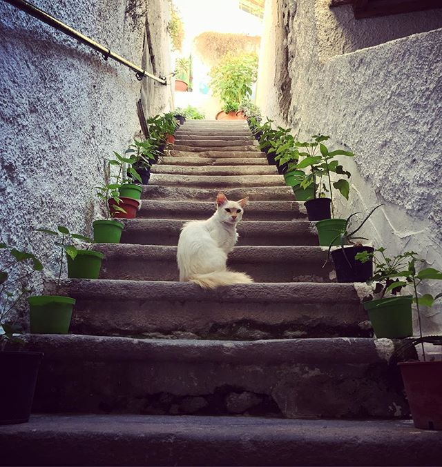 Meeting the locals on our way home. #ischia #forio #meow