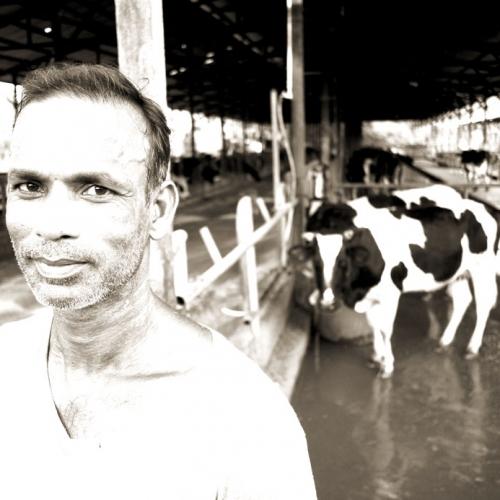 One-of-our-Dairy-Folks-mdt2wa894eguug9febiv01sxov4qpy3enngzcse0zs.jpg