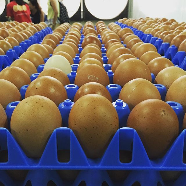 What an egg-ducational morning at N&N egg farm! Did you know that they produce 400,000 eggs a day?