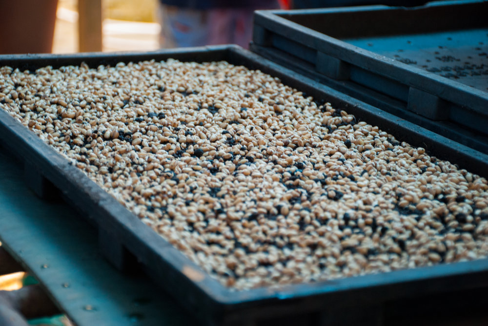 VIOLAH! Germinated seeds