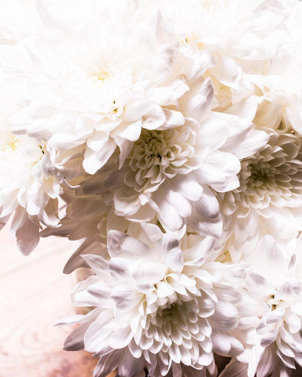 white flowers 2 (1 of 1).jpg