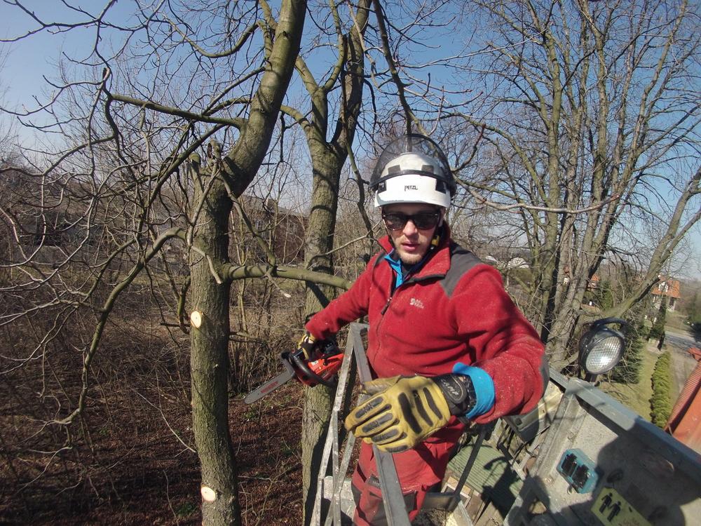 Pielęgnacja drzew owocowych Łódź