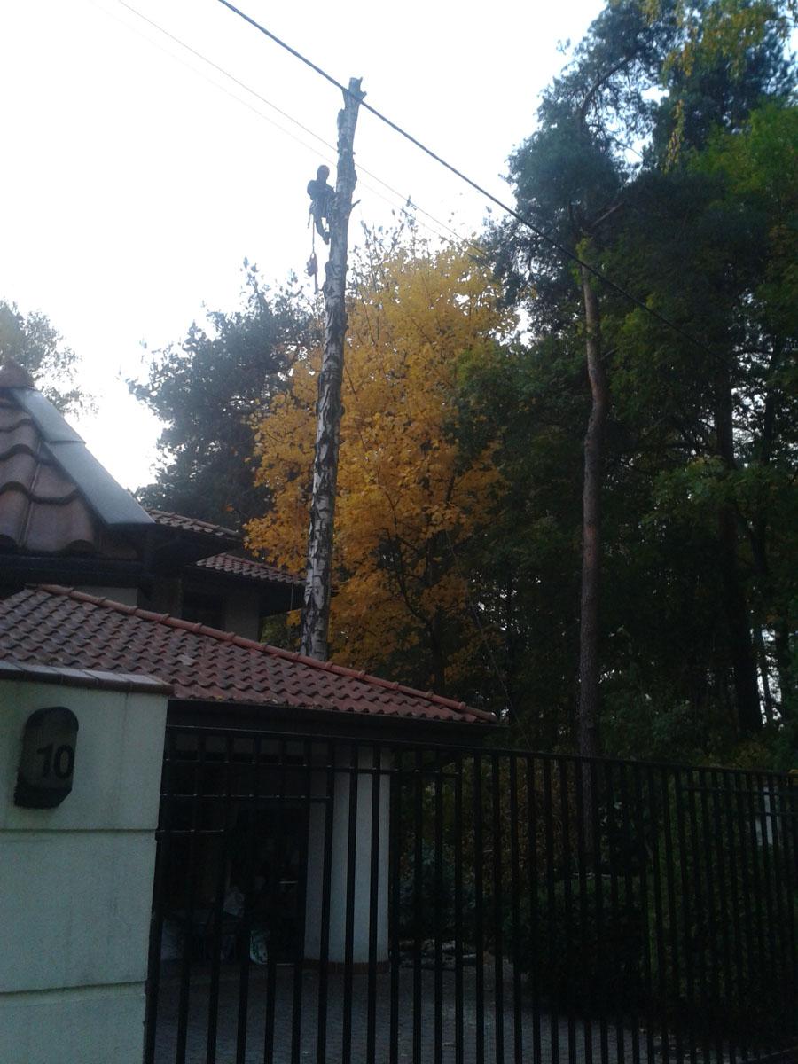 Sekwencyjna wycinka drzew Łódź