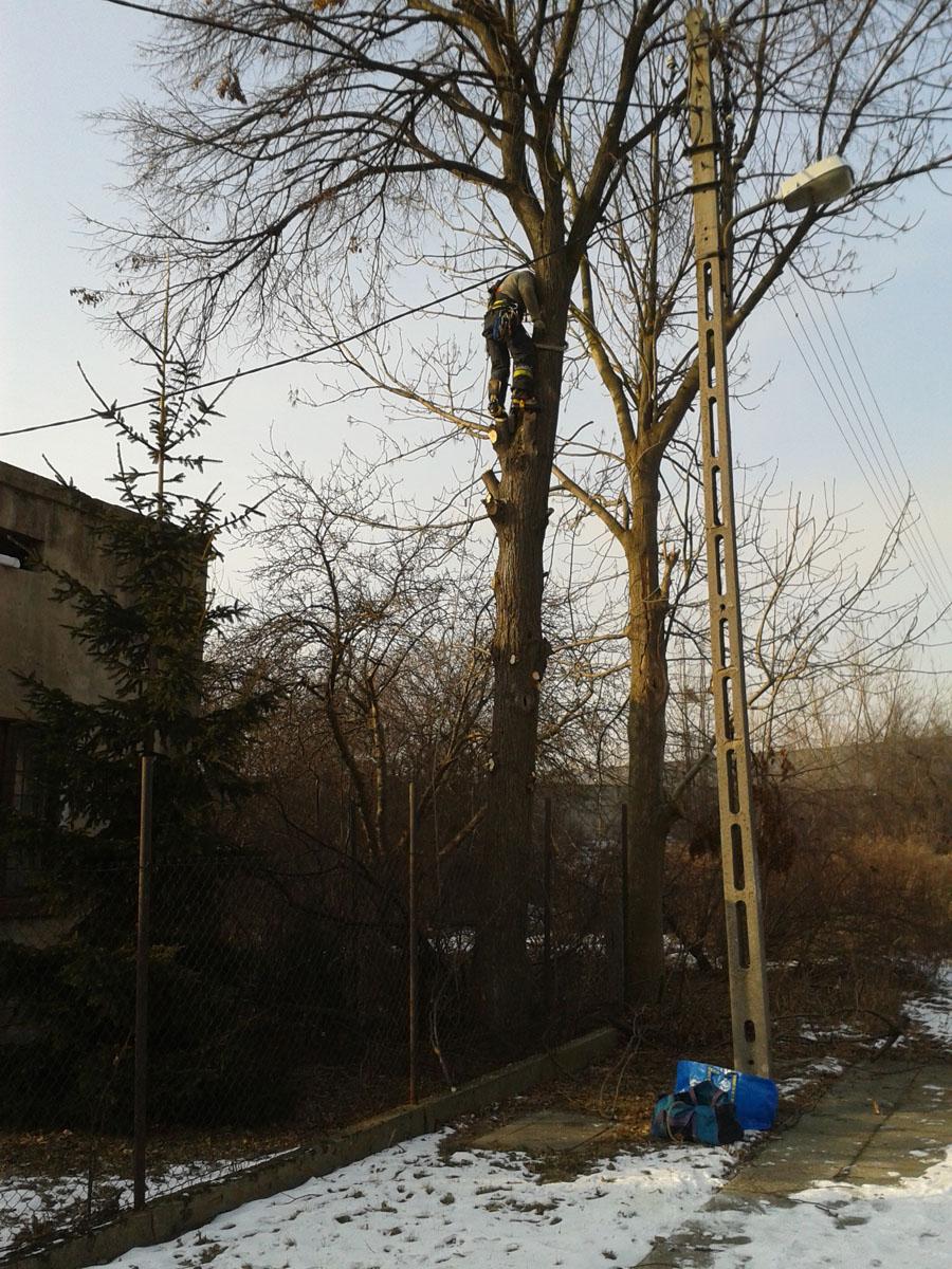 Alpinistyczne wycinanie drzew Łódź