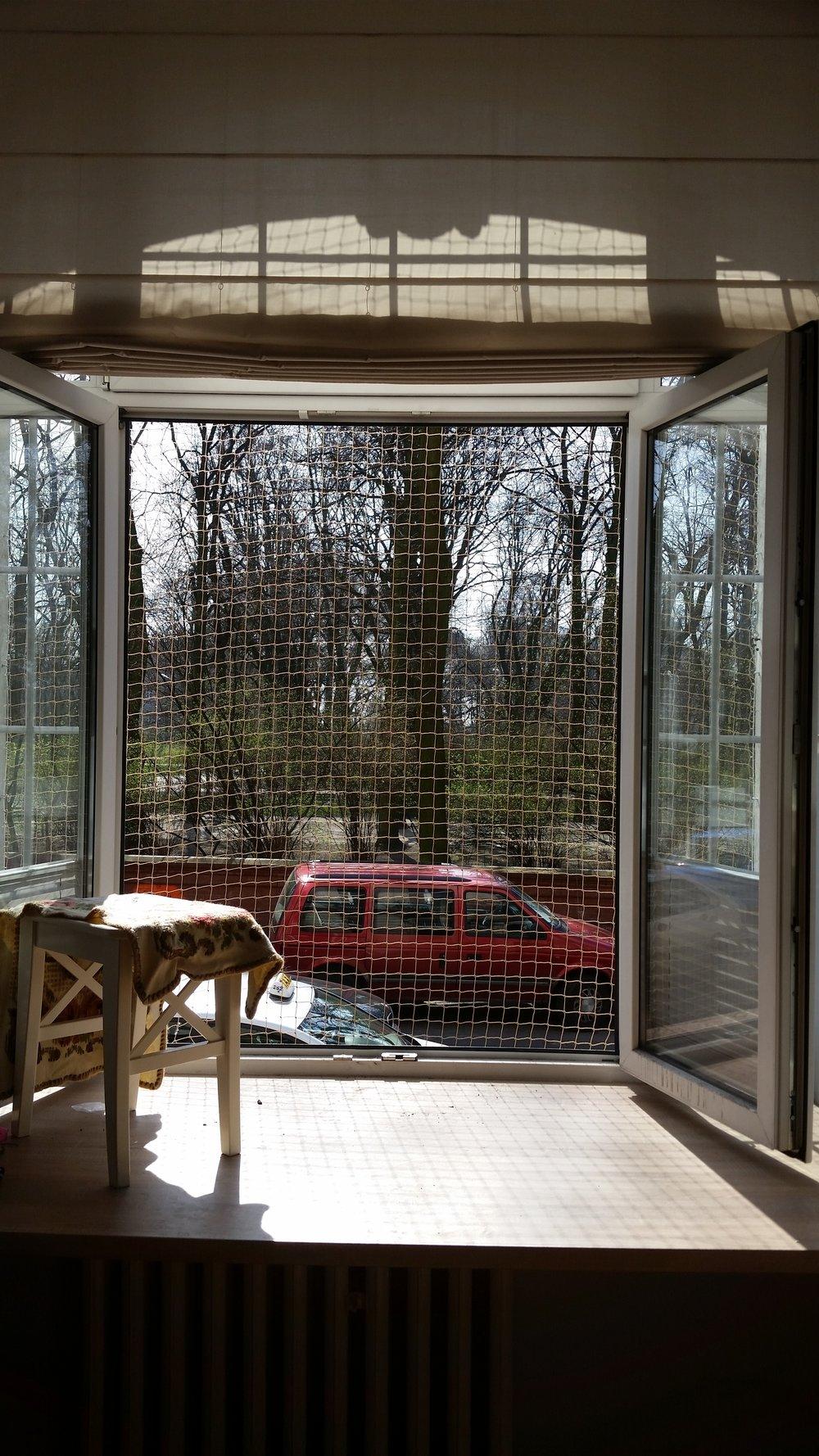 Siatka zabezpieczająca okno dla kota