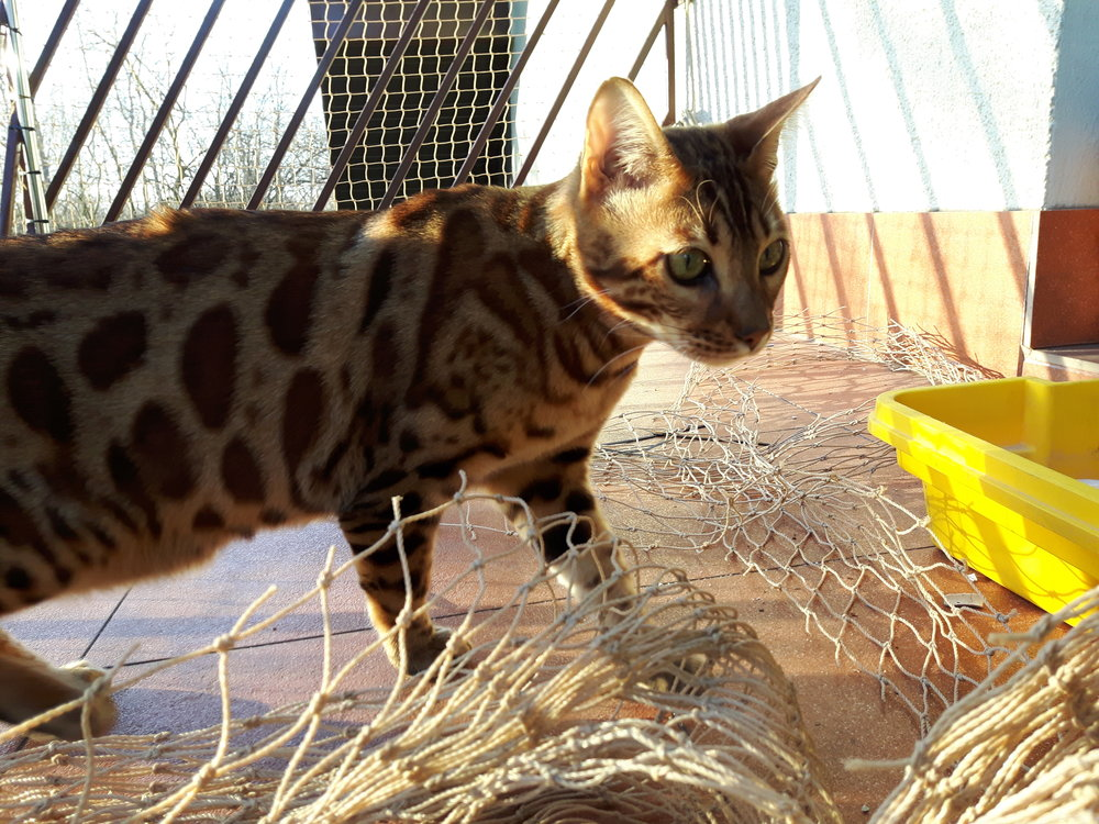 siatka na balkon dla kota