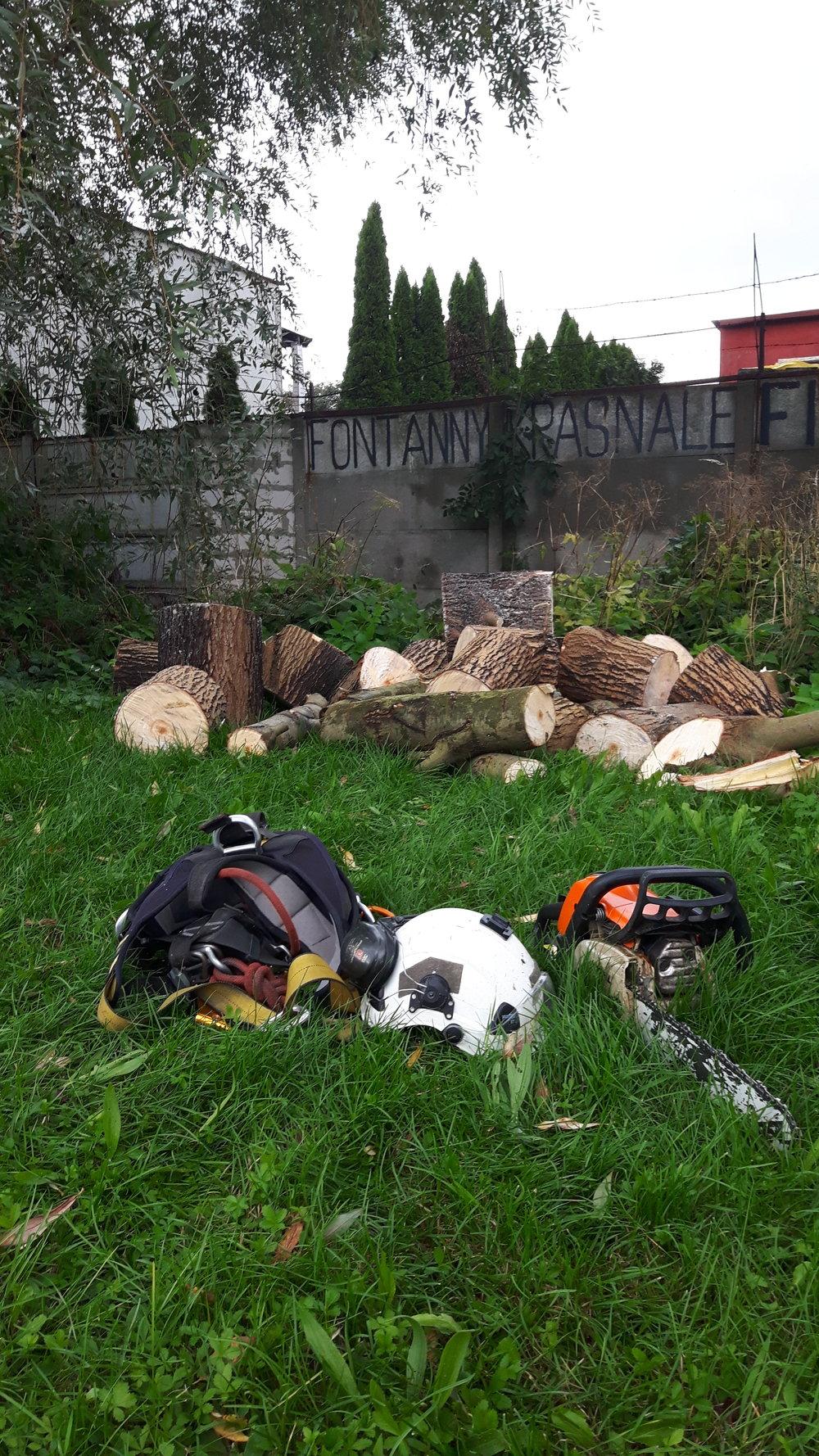 wycinanie powalonych drzew Łódź