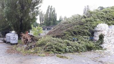 Wycinanie drzew Łódź