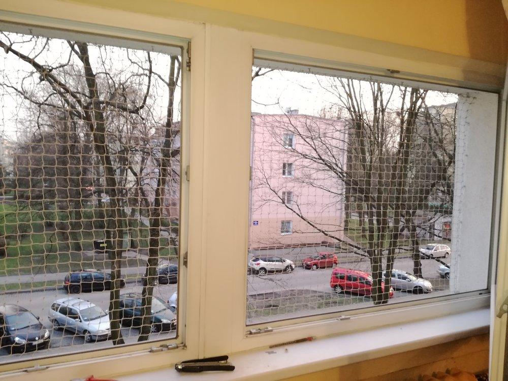 montaż siatki dla kota na oknie