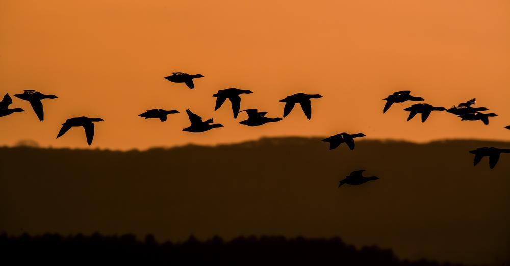 Flying Across Orange Skies.jpg