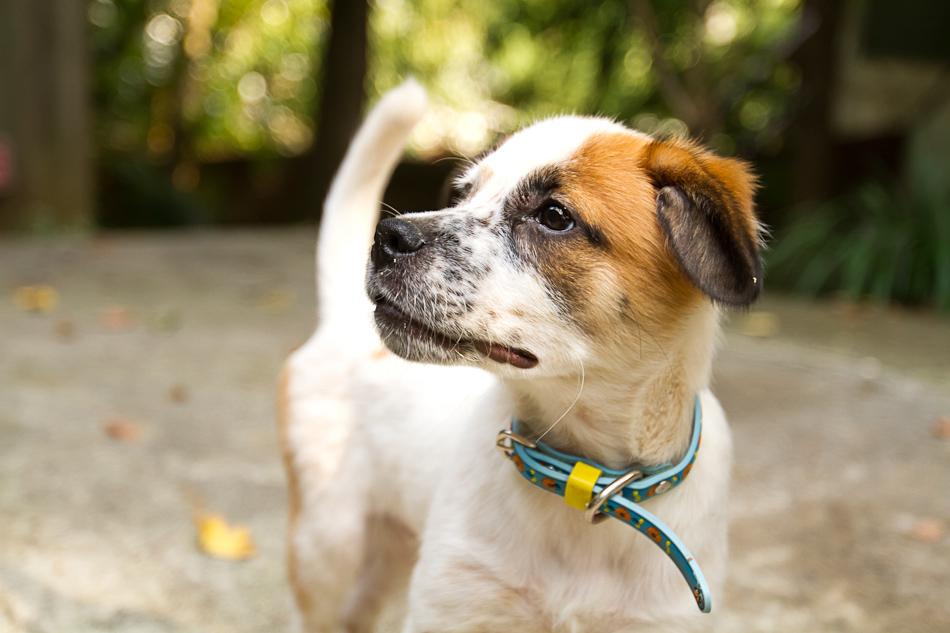Roux the puppy | Atlanta Pet Photography