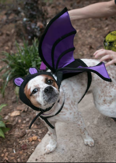 Dog trick or pet treating