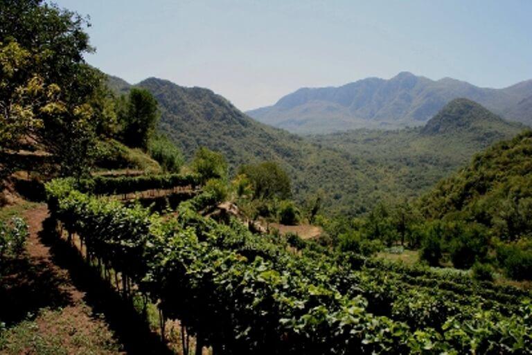 wine tasting lake skadar montenegro