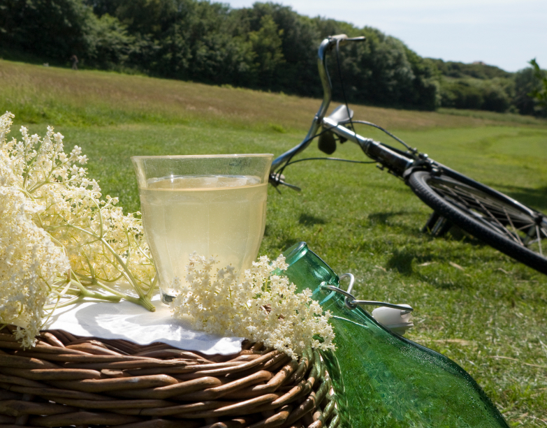 cycling prince edward county
