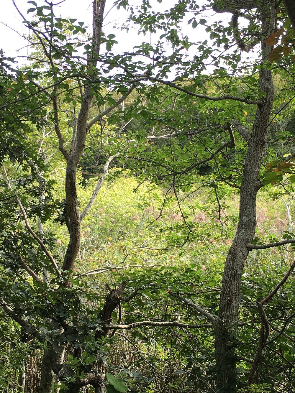 ConservationLand1_1.jpg