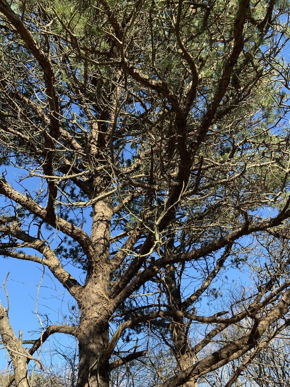ConservationLand6_2.jpg