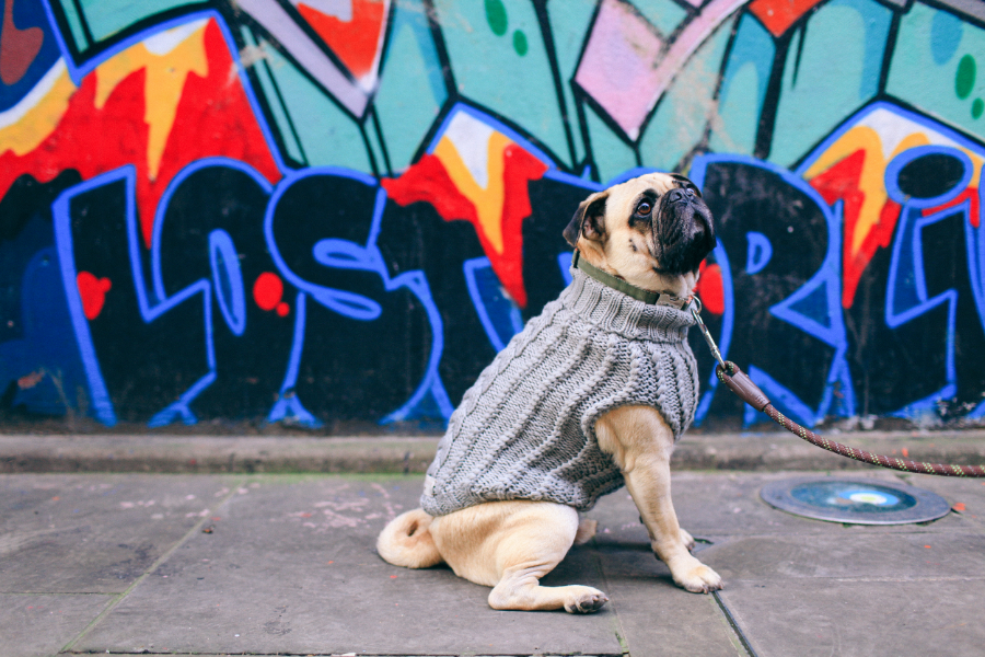nottinghill-london-pug-puglife-pugswag-streetstyle-grafitti-portobelloroad-honeyidressedthepug-dogfashion-maxbone-coolpups-petfashion-style-trends-chic-petblog-fashionblog-Ari-dog-knit-jumper-UK-squishyface
