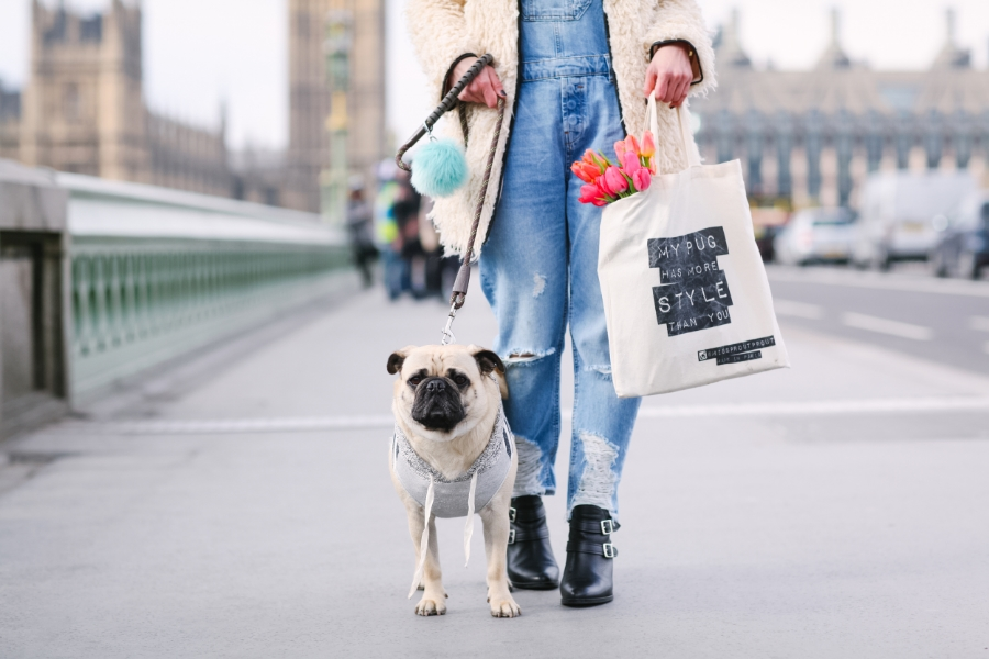 honeyidressedthepug-westminster-thames-london-pug-swag-dog-pet-fashion-streetstyle-hoody-pompom-stripes-diesel-goldwatch-lamberthpier-puglife-trendy-chic-dungarees-tulips-totebag