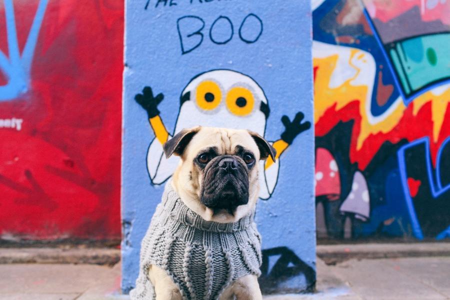 pug-puglife-dogfashion-london-nottinghill-streetstyle-UK-fashion-honeyidressedthepug-pet-dog-pugswag-grafitti-maxbone-puppy-chic-looks-humanandhound-style