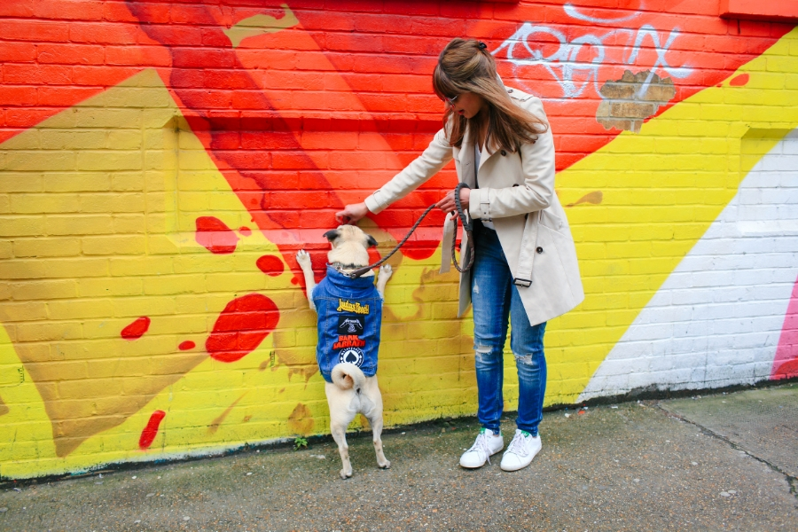 honeyidressedthepug-pug-puglife-streetstyle-shoreditch-london-graffiti-dog-pet-pugswag-coolpups-stylishdogs-ariandmm-trenchcoat-zerouv-mirrorlens-sunglasses-denim-pethaus-eastlondon-curlytail-squichyface-urbanpugswag-patches-cool-colours-streetart-sneakers-adidas-bangs-hound-meandmydog-rock-chic