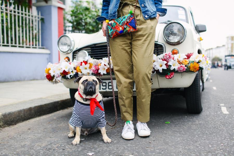 honeyidressedthepug-nottinghill-london-vintagecars-pug-puglife-pugswag-pugfashion-dog-petfashion-bandana-stripes-fawn-streetstyle-londonstreetstyle-cars-pippolli-carwithflowers-bohemian-fiat-whitefiat