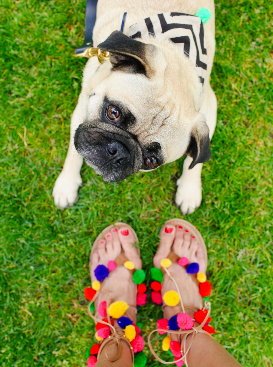 dogfashionblog-petfashionblog-london-honeyidressedthepug-humanandhound-petfashion-puglife-pugswag-coolpups-dog-dogfashion-london-southbank-ampersand-ariandi-fetchandfollow-pompom-trend-asos-pompomsandals-ethnic-bandana-pugsofinstagram 1