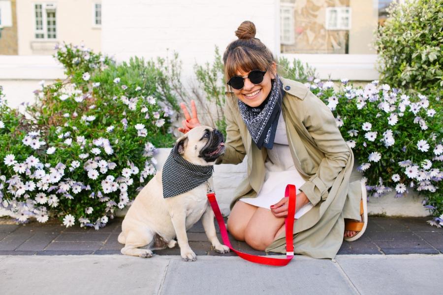 honeyidressedthepug-bandana-trend-doginbandana-pugswag-puglife-pugfashion-chelsea-london-twinning-petfashion-humanandhoundfashion-streetstyle-bibandtucker-topshop-bandanatrend-spring-summerfashion-fashion-monochrome-dog-dogfashion-dogsinclotehs-pug
