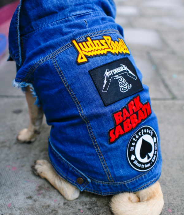 coolpups-pooch-stylishdogs-honeyidressedthepug-pethaus-denim-patch-patches-petfashion-fashion-streetstyle-pug-puglife-curlytail-london-patch-patches-trend-trendalert-blog-twinning-petfashionblogger
