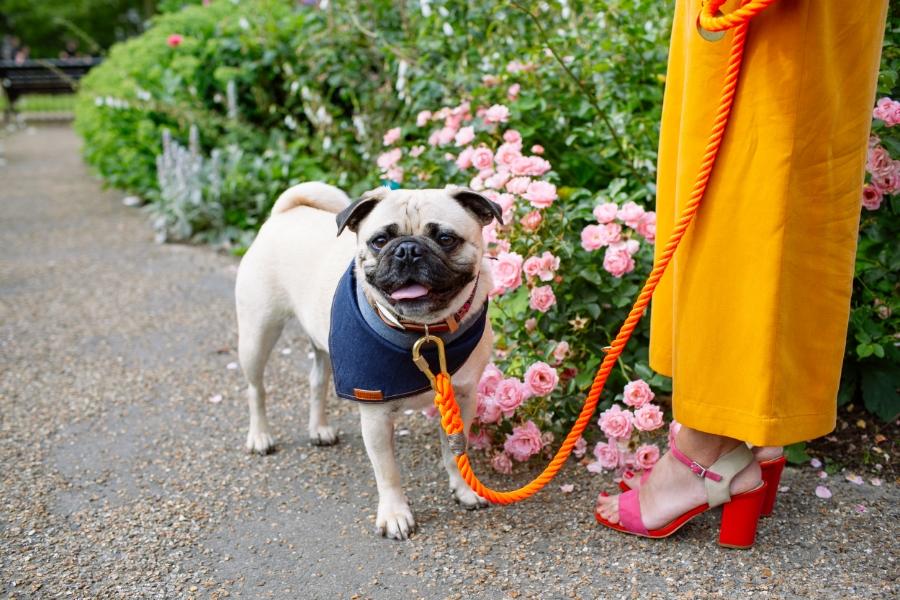 petfashionblog-dogfashion-dogbloguk-london-uk-blogger-petfashionandlifestyle-petfashiontrends-trendalert-humanandhound-streetstyle-leadthewalk-collarsandleads-trendstory-dapperdogs-pugswag-honeyidressedthepug-hydepark-pethaus-denimfordogs-bandana