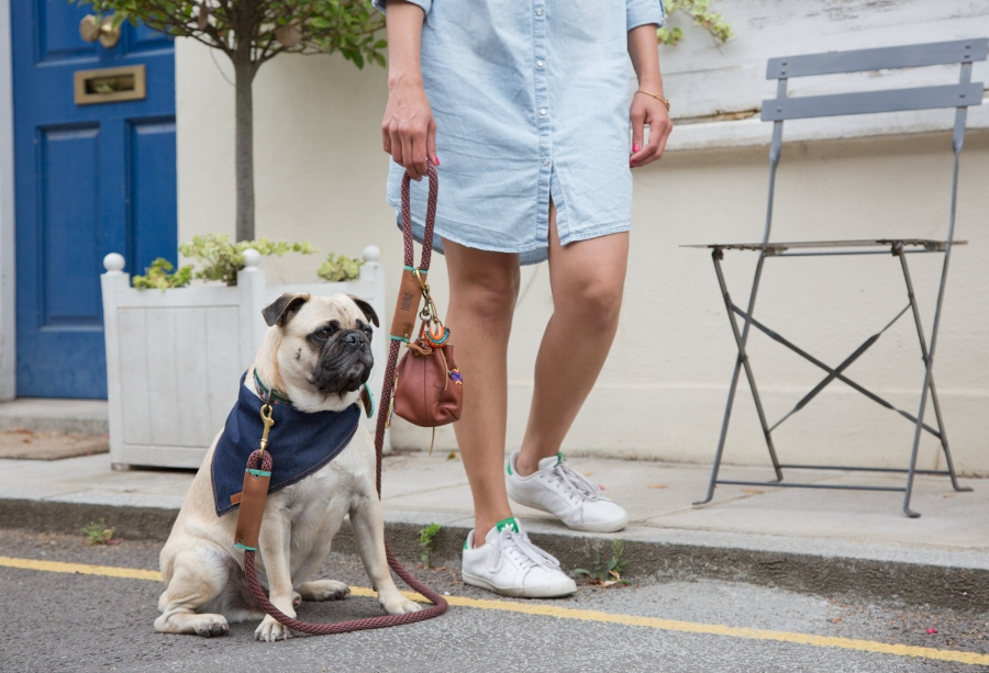honeyidressedthepug-dogfashion-petfashion-cooldogs-london-petfashionblog-dogfashionblog-coolpups-poochette-rewardpouch-fashionfordapperdogs-dogfashionworld-bestindogfashion-humanandhound-dogblog-petblog-fashion&lifestyle-dogaccessories-walkies-DWAMbohemianaccessoriesfordogs-bohemian-boho-bohoaccessories