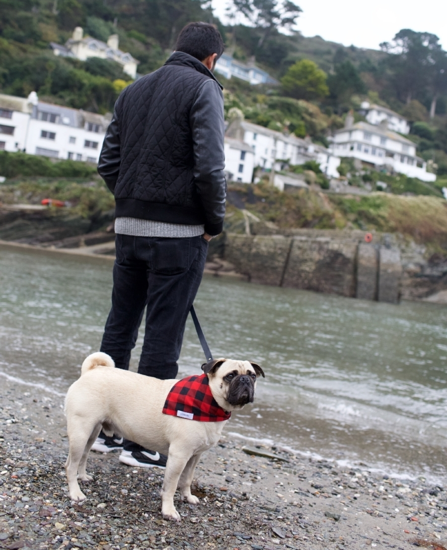 honeyidressedthepug-travelwithdogs-pug-pugswag-dogfriendly-dogblog-petfashion-petblog-bestdogblog-london-uk-cornwall-polperro-fashionandlifestyleblogger-petblogger-fashionbloggerlondon-travelinstyle-dog-coolpups-petinfluencer-fishingvillage-travellingpug-dogsthattravel-traveller-livetoexplore-adventurewithdogs-bestdressedpug-londonblogger