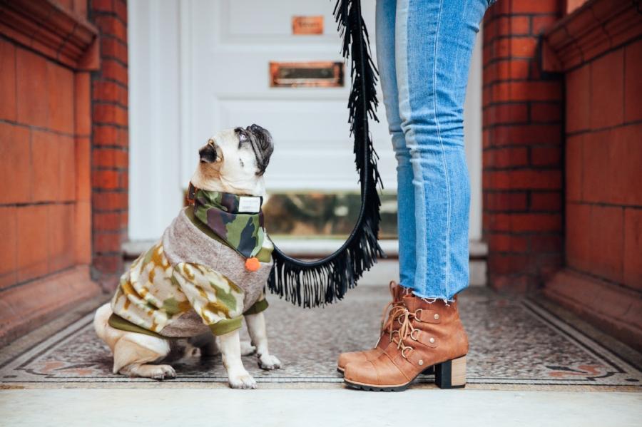 petblog-dogblog-petfashionblog-dogfashionandlifestyle-londonblogger-falltrends-humanandhoundstyle-london-londonpubs-leadwithfringe-leashwithfringe-camouflage-fallfashion-fallwinter2016-autumn-londonpub-londonlife-pugswag-dogsinclothes-londondogs-pug-camotrend-camou-camoprint-bestdogblog-awesome-bestdressedpug