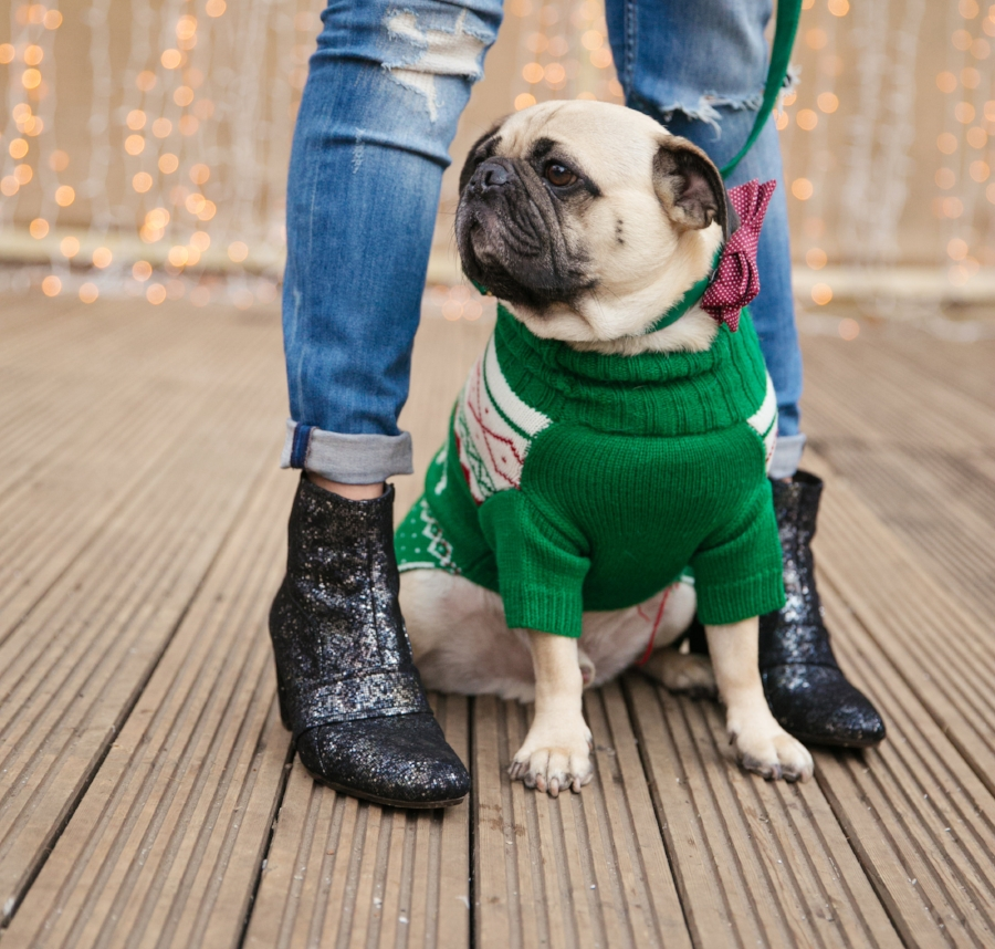 dogblog-bestdogblog-topdogblog-dohfashionblog-petblog-petfashionblog-dogbloglondon-humanandhound-cutepug-dogsinclothes-pugwearingclothes-petblogger-christmas-hydepark-winterwonderland-christmas2016-london-carousel-christmasjumpers-festive-newyear- -  bestdogbloglondon