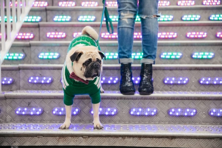 dogblog-bestdogblog-topdogblog-dohfashionblog-petblog-petfashionblog-dogbloglondon-humanandhound-cutepug-dogsinclothes-pugwearingclothes-petblogger-christmas-hydepark-winterwonderland-christmas2016-london-carousel-christmasjumpers-festive-newyear-  bestdogbloglondon