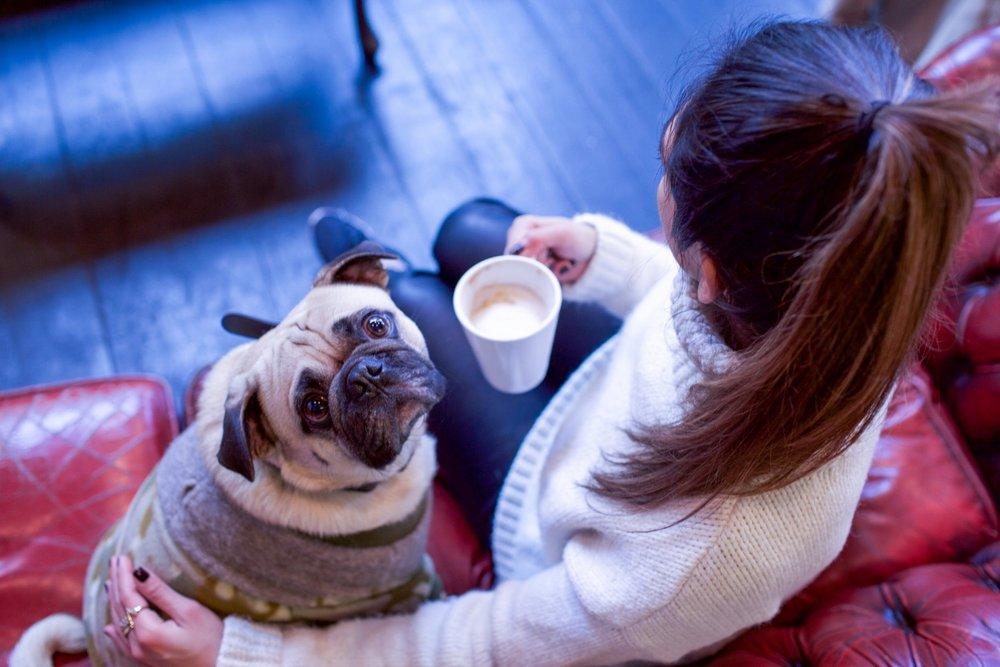 bestdogbloglondon-dogblog-dogfashionblog-bestdogfashionblog-petfashion-pugswag-dogfriendly-coffeeshops-londoncoffeeshops-fixcoffee-lifestyle-cozycoffeeshop-humanandhound-thingstodowithyourdoginlondon-dogfriendlycoffeeshoplondon-petstyleblog