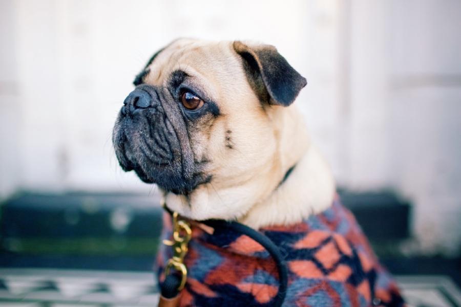 humanandhoundfashion-dogfashionblog-dogfashion-petfashionblog-petfashion-dogsinclothes-london-chelsea-londondoors-twinning-personalstyle-bestdogbloglondon-topdogblog-bestdogblog-bohemianstyle-embroideredjeans-dogjacket-peeptoeboots-londonstreetstyle