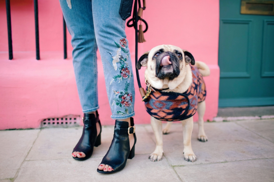 humanandhoundfashion-dogfashionblog-dogfashion-petfashionblog-petfashion-dogsinclothes-london-chelsea-londondoors-twinning-personalstyle-bestdogbloglondon-topdogblog-bestdogblog-bohemianstyle-embroideredjeans-dogjacket-peeptoeboots-londonstreetstyle-pink-pinkwall
