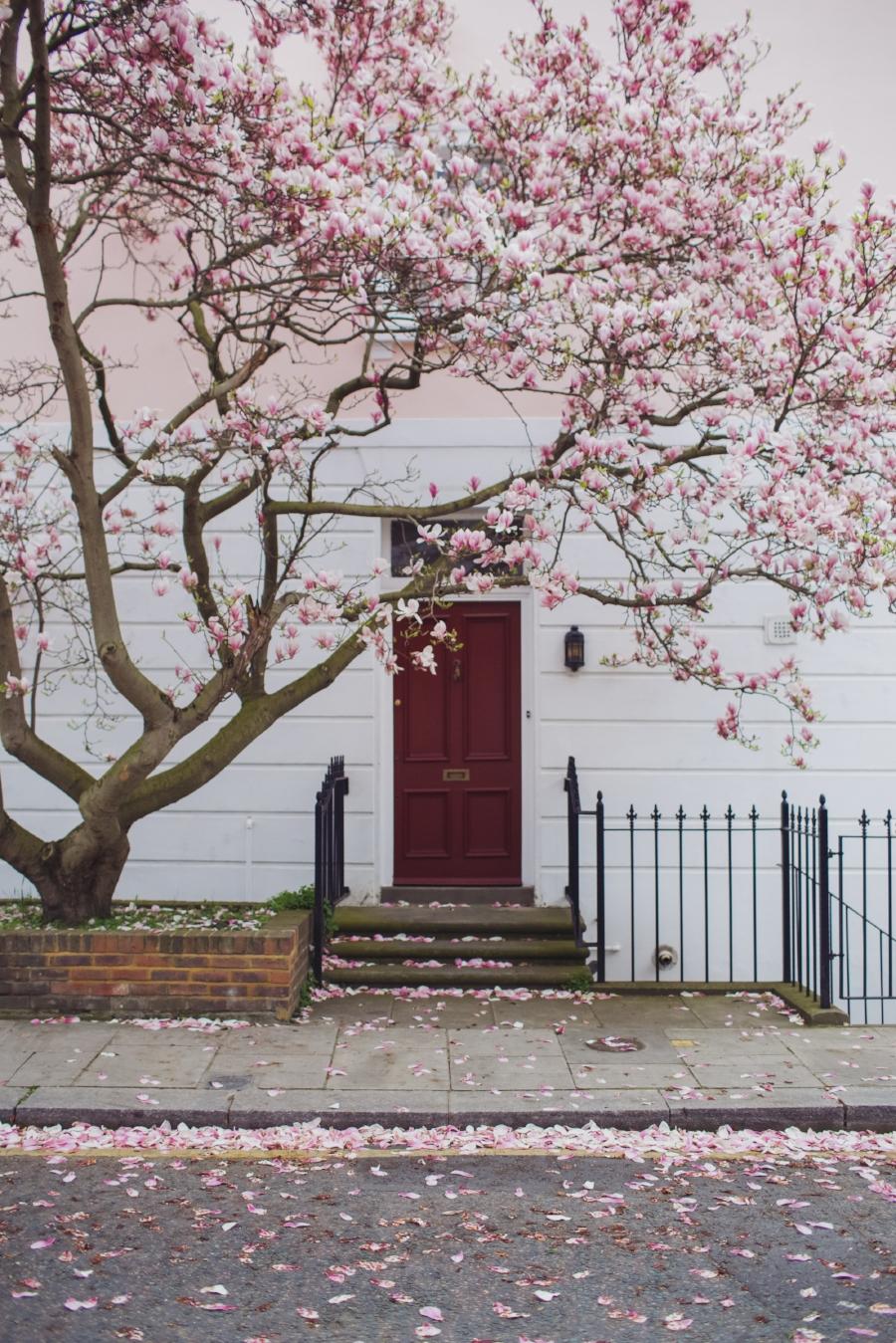 london-spring-magnolia-blossom-spring2017-springfashion-springstyle-puginclothes-bestdogblog-humanandhoundfashion-petfashionblog-dogfashionblog-humanandhoundblog-londonblogger-uk-clesea-pink-dogfriendly-dogblog-topdogblog-twinning-style-best