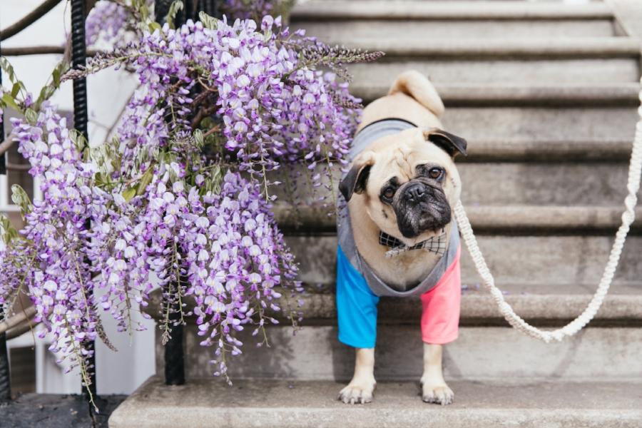 dogfashion-dogtrends-humanandhoundfashion-humanandhoundstyle-twinning-dogandhumanstyle-twinningwithyourdog-dogfashionblog-petfashionblog-bestdresseddog-bestdogblog-london-springinlondon-wisteriahysteria-springfever-pinkbikerjacket-tasselearrings-neon