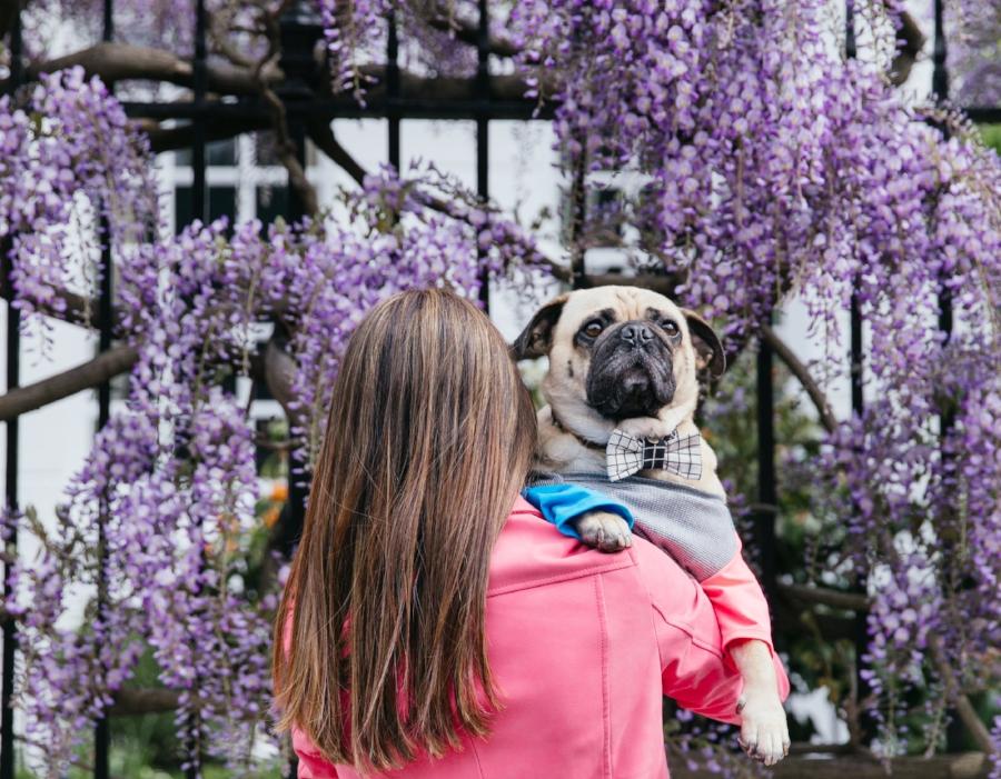 dogfashion-dogtrends-humanandhoundfashion-humanandhoundstyle-twinning-dogandhumanstyle-twinningwithyourdog-dogfashionblog-petfashionblog-bestdresseddog-bestdogblog-london-springinlondon-wisteriahysteria-springfever-pinkbikerjacket-tasselearrings-neon-wisteriaseason-purple-cooldogs-coolpooch-puppyfashion-dogsinclothes-puginclothes-cooldogblog-ootd-instagraminfluencer-petinfluencer-doginfluencer
